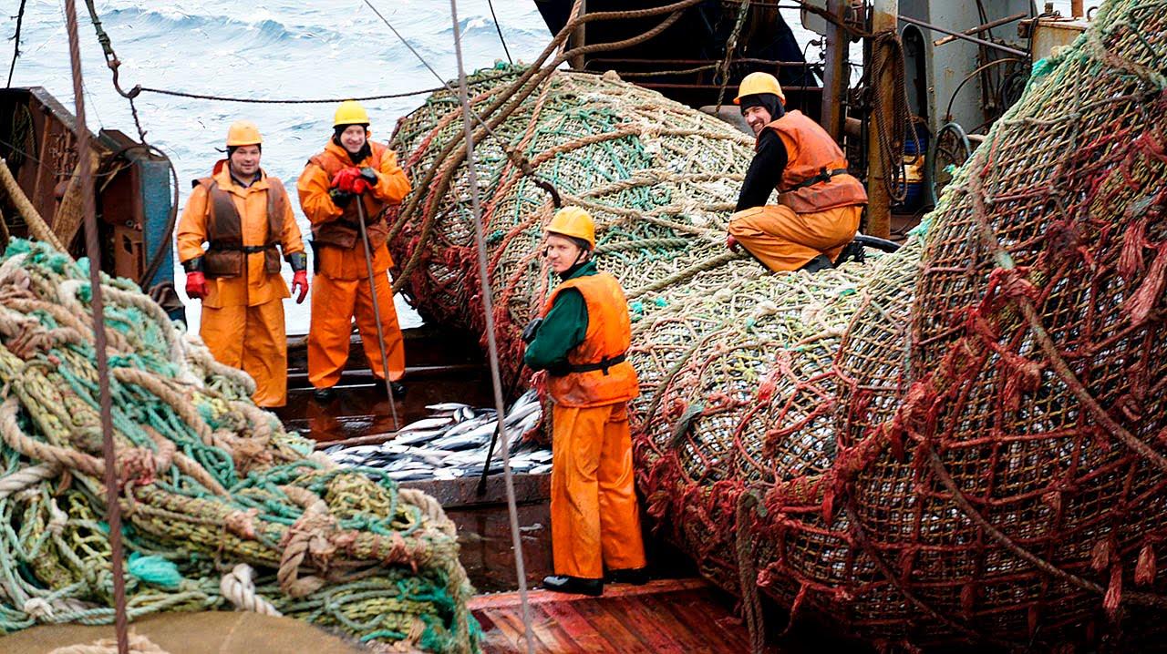 Ищем партнеров рыбной продукции и морских деликатесов